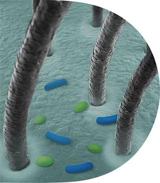 A mikrobiom egyensúlya  felborul