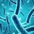 Fő   baktériumtörzsek